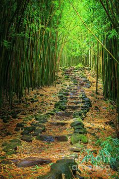 One of my favorites on our trip to Hawaii! Bamboo forest along the Pipiwai trail to Waimoku Fall in the Kipahulu area of Haleakala National Park in Maui, Hawaii Hawaii Vacation, Hawaii Travel, Maui Hawaii, Hawaii Usa, Places To Travel, Places To See, Magic Places, All Nature, Nature Quotes