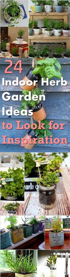 Get inspired by following these 24 Indoor Herb Garden Ideas we've collected from around the web, click on the links given below to see the images and tutorials that you like to know about.