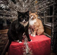 Christmas thugs.
