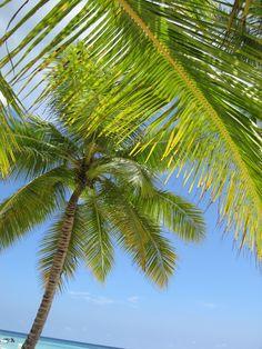 Saona, Caribbean