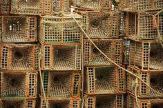 FISHING NET by nunomartins