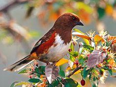 A casa de todos fotos blog: Pássaros raros - post 400