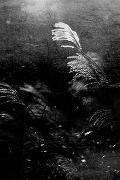 "shadowinlull: ""Radio Silence © shadowinlull / 2016 """