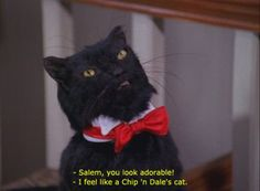 salem saberhagen in clothes My Spirit Animal, My Animal, Salem Cat, Salem Saberhagen, Tv Show Quotes, Reaction Pictures, Cat Memes, Cool Cats, Funny Cats