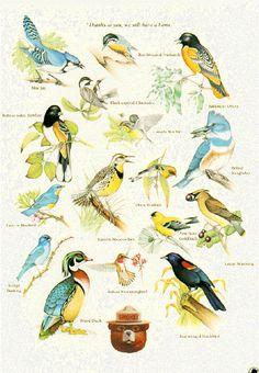 Smokey Bear nature poster: Birds