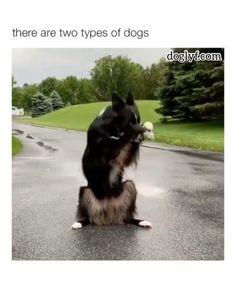 Is it troo mumz? - Elena - Is it troo mumz? Cute Funny Dogs, Funny Dog Memes, Funny Animal Memes, Cute Funny Animals, Funny Animal Pictures, Cute Baby Animals, Animals And Pets, Strange Animals, Animals Sea