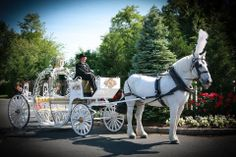 Wedding at Clarks Landing in Point Pleasant featuring our Cinderella Carriage pulled by Sinbad the Percheron. Photography by Darci Doran.