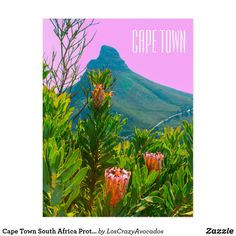 Cape Town South Africa Protea Lion's Head Postcard Cape Town South Africa, Keep It Cleaner, Lions, Holiday Cards, Greeting Cards, Painting, Art, Christian Christmas Cards, Art Background
