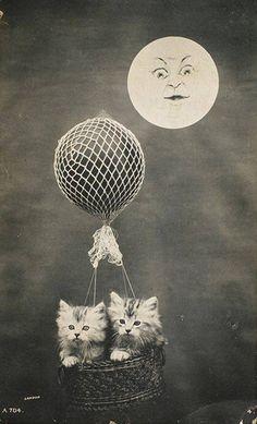 Kitties and moon.