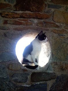 Cat - captured on Serifos, Greece