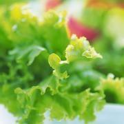 Elmúltam 60 éves, és ez a növény visszaadta a látásom, eltávolította a zsírt a májamról, de más is történt... - Blikk Rúzs Parsley, Lettuce, Celery, Herbs, Vegetables, Food, Turmeric, Veggies, Herb