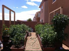 This shows pictures of raised beds in Las Vegas.  The beds are nicely built and are shown before and after planting.  The pictures are really good and show how successful you can be with raised bed gardening.