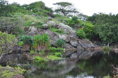 Na Pohaku O Hau Wahine, a fantastic oasis along Kapa'a Quarry Rd in Kailua.  This won't be much of a secret as people discover it's beauty.