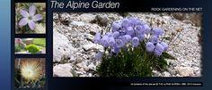 The Alpine Garden. Rock Gardening On The Net