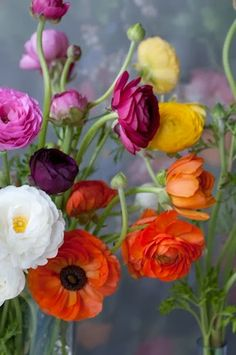Ranunculus My FAVORITE flowers for over 30 years now!  They start out with a little tight bud and as they open, they display layer upon layer of ruffled petals!