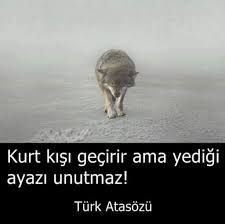 ☾✫yunus adıgüzel Quotes, Movie Posters, Ss, Dating, Tumbling Quotes, Popcorn Posters, Quotations, Film Posters, True Words