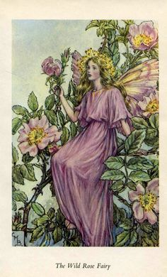 SALE Antique Color Book platePlate Print Vintage Bookplate Book of Flower Fairies The Wild Rose Fairy Cicely Barker 1960's
