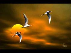 ▶ On My Wings - Nightingale - YouTube