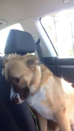 """The """"Given Up All Hope"""" 