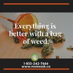 Everything is better with a bag of weed. www.momsask.ca #weedislife #marijuanaonline #marijuanasaskatchewan #cannabissaskatchewan #saskatchewan #buyweedonline #weeddelivery #bagofweed Buy Weed Online, Viral Videos, Trending Memes, Everything, Funny Jokes, Good Things, Mom, Bags, Handbags
