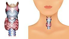 Признаки заболевания щитовидной железы — Всегда в форме!