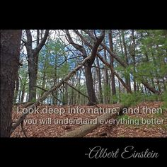 """Look deep into nature, and then you will understand everything better.""  -Albert Einstein"