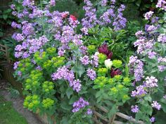 36 Best Plants for a Cottage Garden and Design Ideas