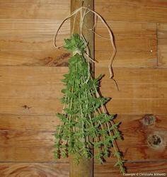 Faire sécher les plantes médicinales Herbs, Permaculture, Plants, Garden