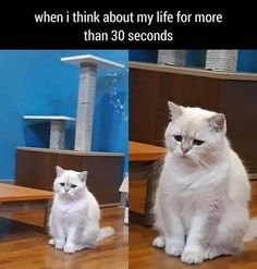 Just thinking - World's largest collection of cat memes and other animals Kitten Meowing, Kittens, Cute Cats, Funny Cats, Cat Watch, Catwoman, Cute Baby Animals, Cat Memes, Our Love