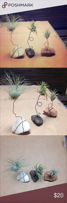 Air plants (set of three) room decor Adorable set of three small air plants in handmade wire holders a top rocks. Terraific Finds Other