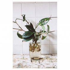 On with the honour roll of mentors who will be at the workshops is our roving stylist to help you one on one Cheryl! Cheryl, Indoor Plants, Flower Arrangements, Glass Vase, Stylists, Jar, Floral, Flowers, Green