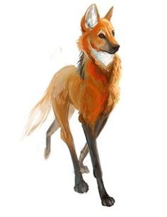 Gorgeous maned wolf art!                                                                                                                                                                                 More