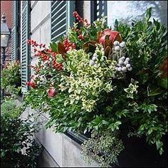 """Window box - """"Winter"""" plantings - Love it! :)"""