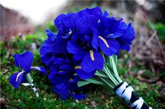Google Image Result for http://wedding-pictures-03.onewed.com/33627/wedding-flower-alternatives-bridal-bouquets-from-etsy-cobalt-blue-paper.jpeg