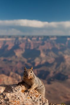 Photo and caption by Shubhra Pandit  I was at the Yaki Point trying to catch some morning views of the Grand Canyon when this little fellow came along and hopped around very nonchalantly; reminding me that this was his home and I a visitor  Location: Yaki Point, Grand Canyon, Arizona, USA