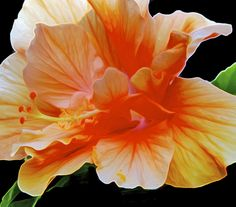 orange sherbet burst by Beth Pearson on 500px