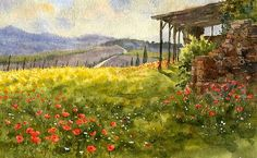 Hill with poppies.   Tuscany