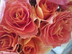 Rose Sales Online - BRASS BAND - FLORIBUNDA Rose, $19.50 (http://www.rosesalesonline.com.au/brass-band-floribunda-rose/)