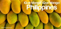 "iQUE Mango means ""so beautiful"" hence ""Beautiful Philippines!"". Mango in the Philippines is considered as the worlds sweetest.  'Manila Super Mango' in the Guinness Book of World Records as the sweetest in the world.   Philippine Mango  Zambales Mango  Y warm girl asean"