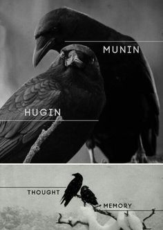 """In Norse Mythology, Hugin (""""thought"""") and Munin (""""memory"""" or """"mind"""") are a pair of ravens that are the shamanic helping spirits of the god Odin. These informants are two of the many sources of Odin's prodigious wisdom and it is from this associated that O Corvo Tattoo, Norse Pagan, Odin Norse Mythology, Les Religions, Crows Ravens, Norse Vikings, Viking Symbols, Asatru, Gods And Goddesses"""