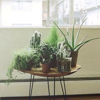そのアイデアとセンスに脱帽。観葉植物のある美しいインテリア風景