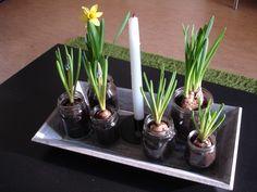 spring flowers planted in old jam/honey jars