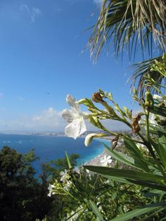 Nice - view - Highestpoint - France
