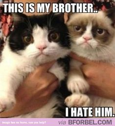 Grumpy Cat's real brother!