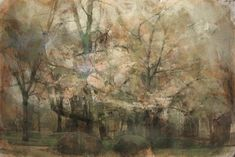 a large scale tree/forest painting by emily leonard = my dream