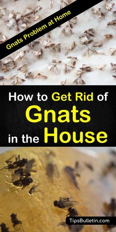 2 Fast & Easy Ways to Get Rid of Gnats in the House - - Learn how to use everyday items to get rid of gnats in the house. Discover how to quickly get rid of fruit flies and gnats from your kitchen with essential oils, and other DIY fly traps. Deep Cleaning Tips, House Cleaning Tips, Natural Cleaning Products, Cleaning Hacks, Green Cleaning, Home Design, Fruit Flies In House, Getting Rid Of Nats, Gnat Traps