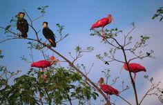 Aves en Los Llanos, Venezuela