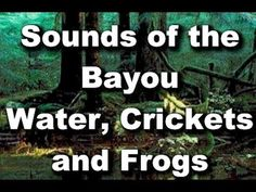 Relaxation Sounds : Blue Bayou - Crickets, Frogs and Bugs Blue Bayou, Nature Sounds, Sound Healing, Chakra Meditation, Calm Down, Relaxing Music, How To Fall Asleep, Hunting, Spirituality