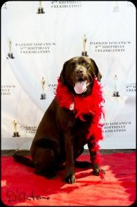 Red Carpet Birthday | Chronicles of a Domestic Dilettante #dogbirthdayparty