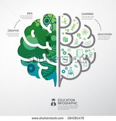 infographic Template brain education and science concept vector illustration